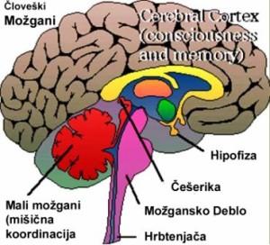 črevesne bakterije producirajo toliko hormonov kot vse žleze v možganih