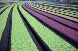 Dobre bakterije predstavljajo pravo revolucijo v kmetijstvu, vodnem gospodarstvu, varovanju okolja in  krepitvi človekovega zdravja